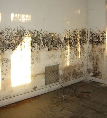 mould prevention